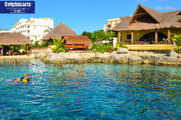 5 best places for dolphin swims in the riviera maya cozumel