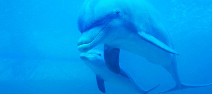 El comportamiento de los delfines: 5 curiosidades