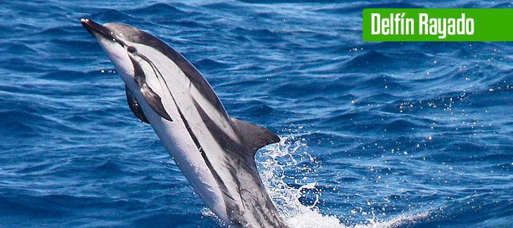 9 Tipos increíbles de delfines en México