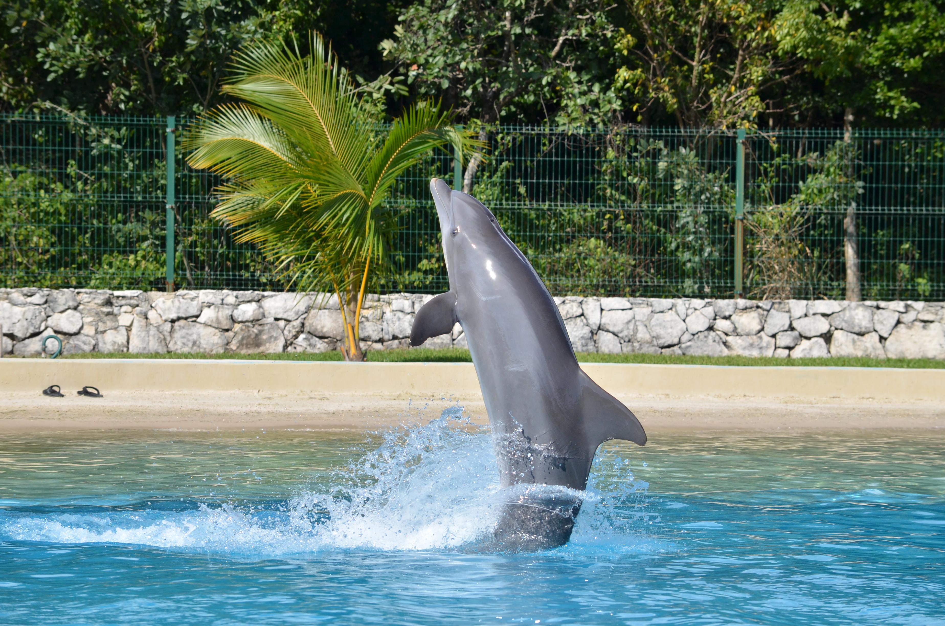 Barceló es una de las locaciones de Dolphinaris donde se puede nadar y conocer el comportamiento de los delfines.