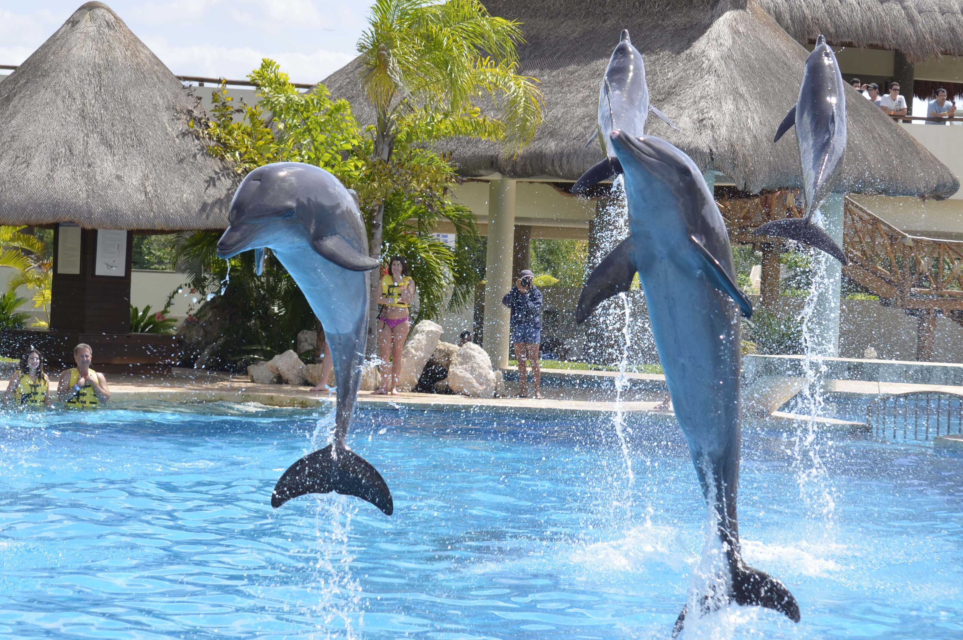 Your wedding rehearsal at Dolphinaris locations!