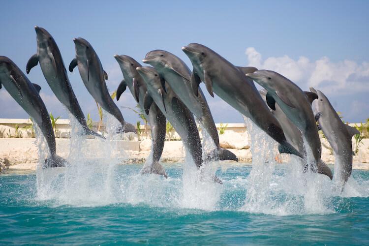 ¿Cuáles son las características de los delfines?