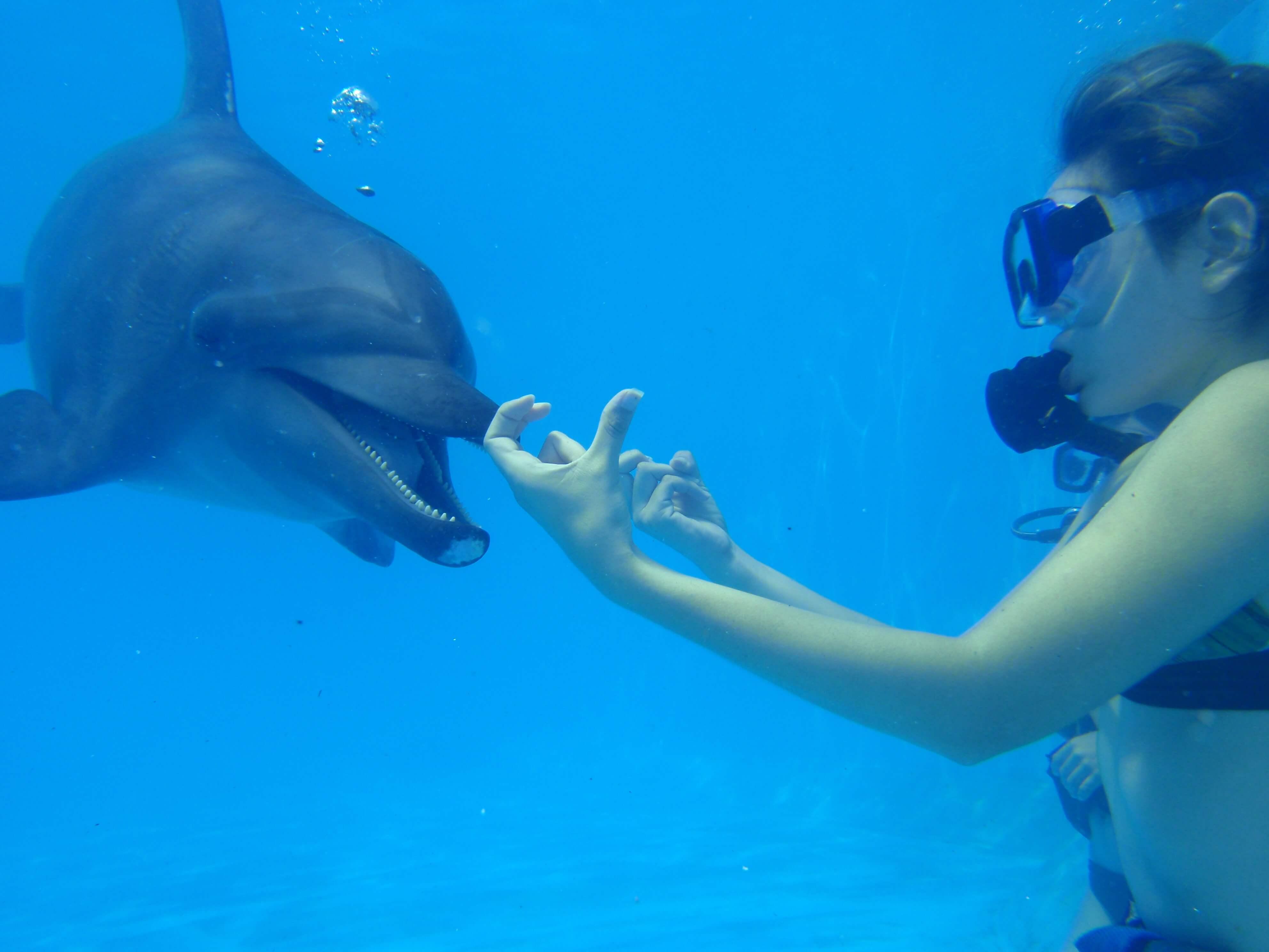 Tips y consejos para tu nado con delfines