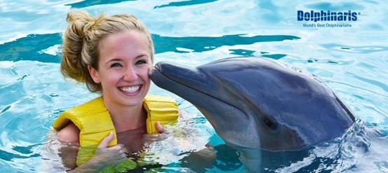 Encuentra los MEJORES precios para nado con delfines