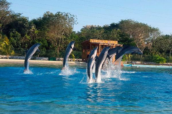 Delfines en Dolphinaris Riviera Maya