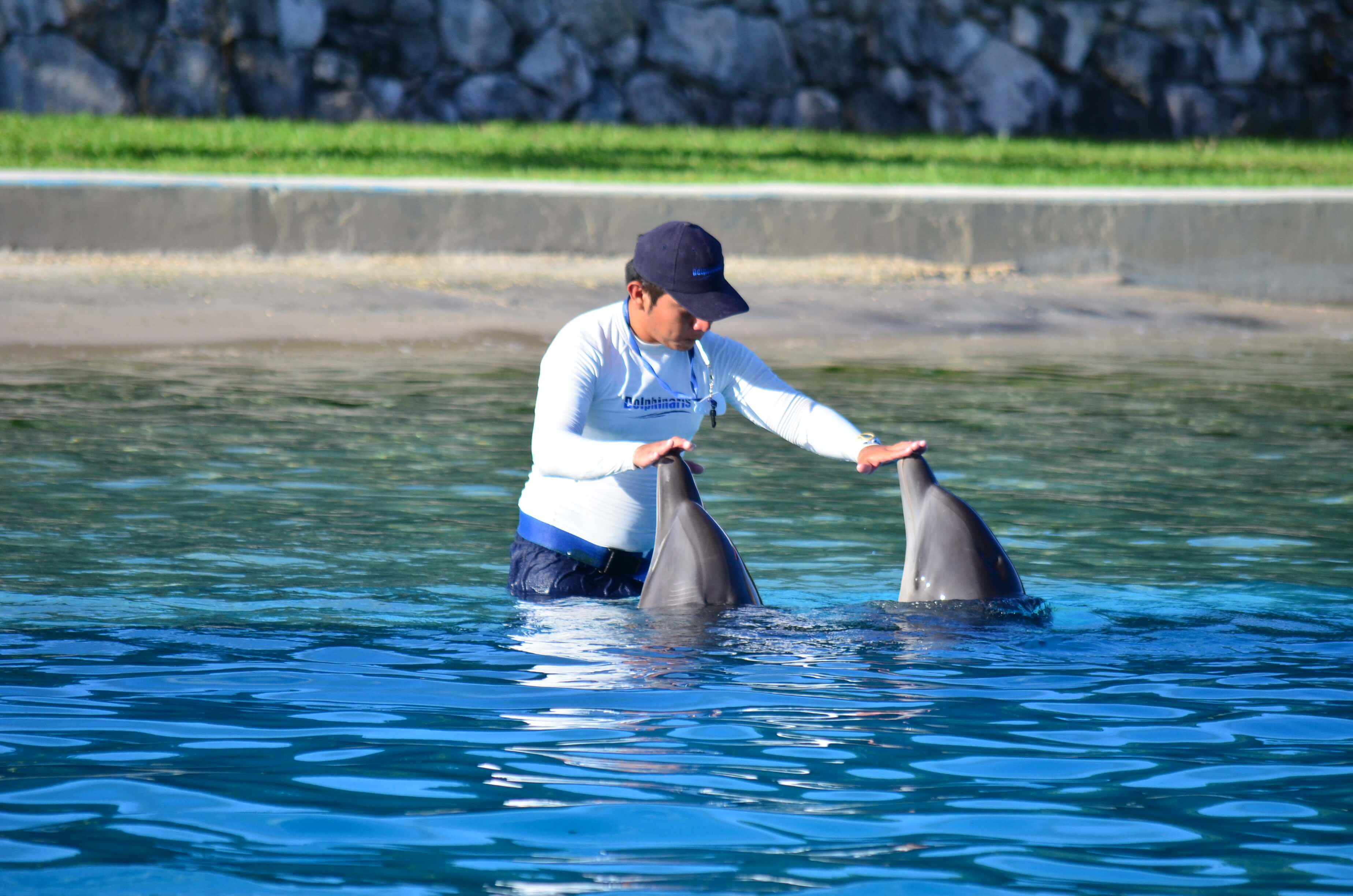 Nado con delfines en Dolphinaris: Los delfines pueden realizar muchas actividades.