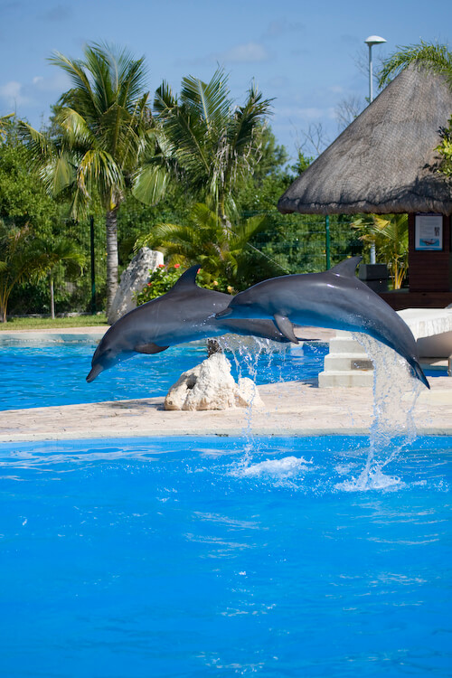 The weather in Riviera maya is warm nearly all year.
