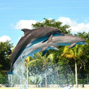 Dolphinaris Riviera Maya's Dolphins Jumped Out
