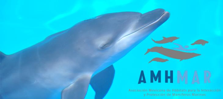 AMHMAR – Asociación Mexicana de Hábitats