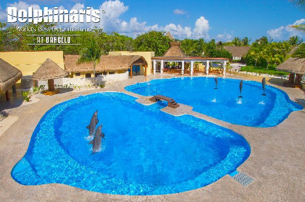 best places to swim with dolphins in the world [dolphinaris barcelo]