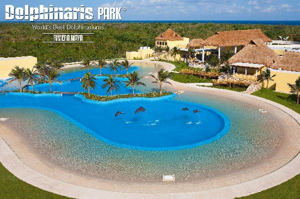 best places to swim with dolphins in the world [dolphinaris riviera maya]