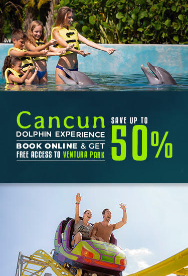 Save up to 50% in dolphin experience at Cancun.