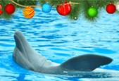 How to celebrate Christmas with a dolphin theme