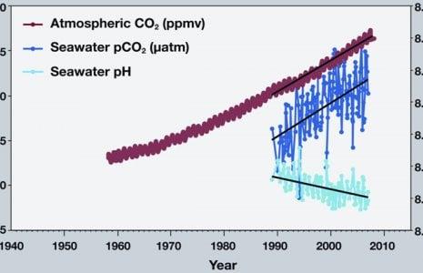 co2 and ph levels in ocean graph diagram-consecuencias sobre la acidificación del océano - Dolphinaris in Cancun