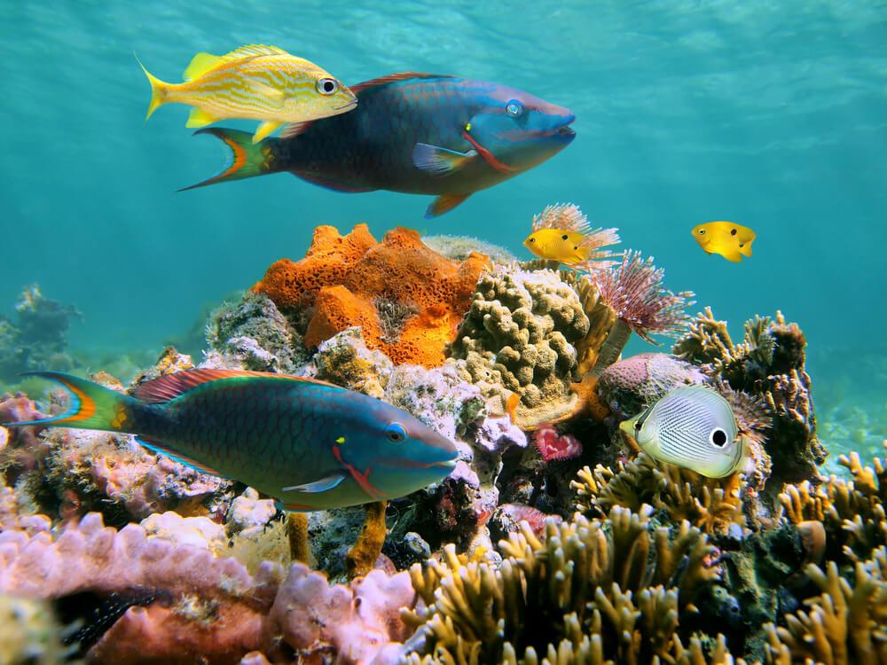 Fauna marina en Cozumel.