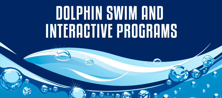 Dolphin swim and interactive programs