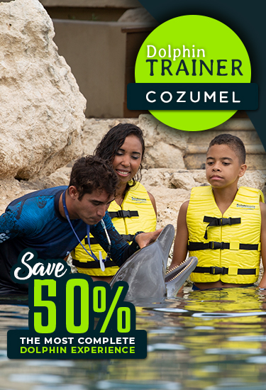 Become a dolphin trainer for a Day at Dolphinaris Cozumel