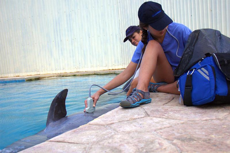 Dolphinaris AQUAVET®III Ultrasonography cancun