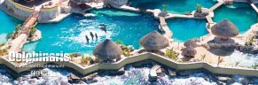 Dolphins in Cozumel