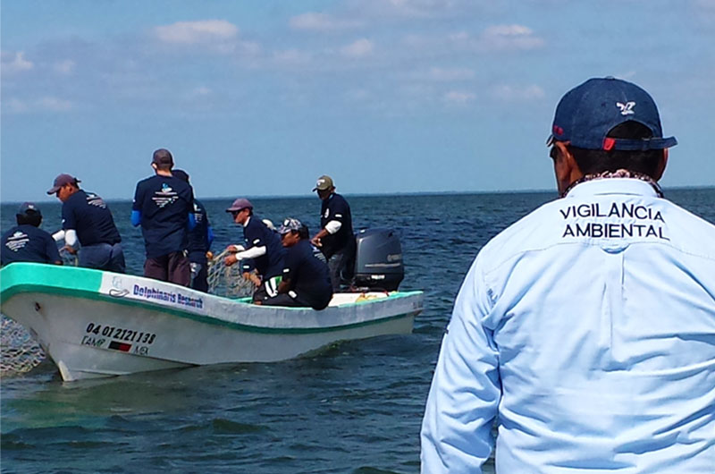 Dolphinaris foundation conservation proyects in Terminos lagoon Campeche