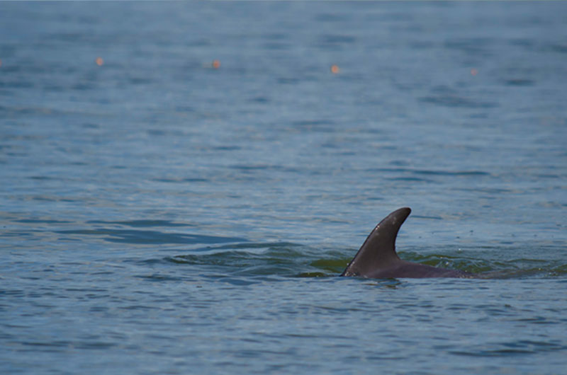 Dolphinaris foundation conservation in Terminos lagoon Campeche.