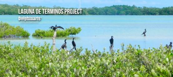 dolphinaris-participates-in-laguna-de-terminos-en-campeche