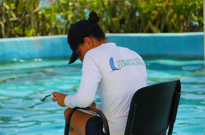 Dolphinaris Texas A&M University Corpus Christi program main focus is research and animal care