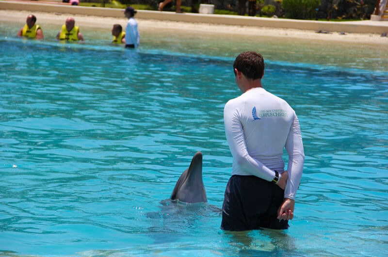 Dolphinaris Texas A&M University Corpus Christi program students work directly with the dolphins and their trainers