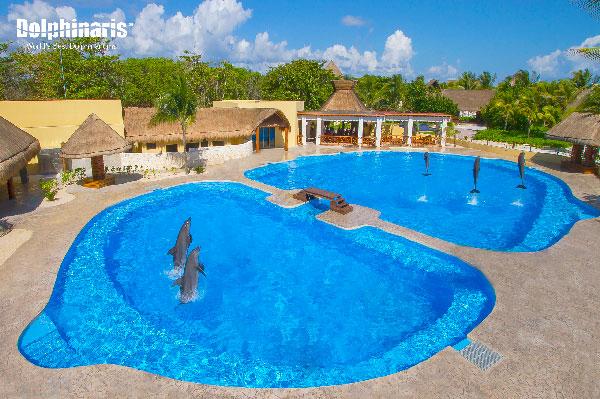 ¿Dónde están los mejores delfinarios en la Riviera Maya? Barceló