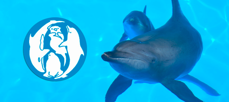 EAAM: European Association for Aquatic Mammals