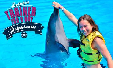 Encuentro con delfines en Playa del Carmen Entrenador por un día