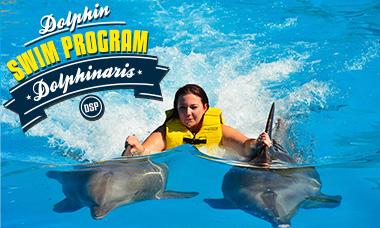 Encuentro con delfines en Playa del Carmen Swim Program