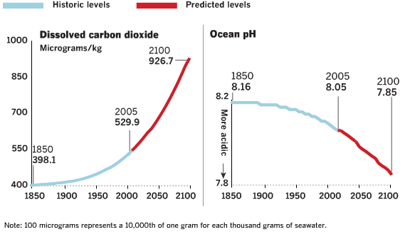 future and past ocean ph levels-Consequences to Ocean Acidification - Dolphinaris in Playa del Carmen