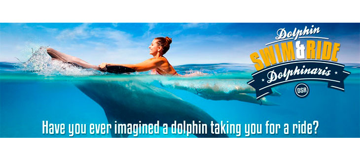 Here are 5 Amazing Playa del Carmen Dolphin Encounters like Swim and Ride