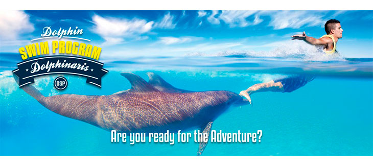 Here are 5 Amazing Playa del Carmen Dolphin Encounters like Swim Program
