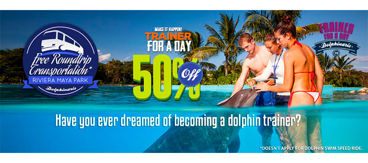 Here are 5 Amazing Playa del Carmen Dolphin Encounters like Trainer for a Day