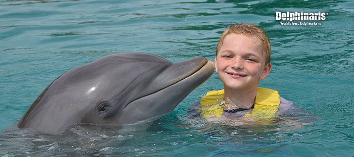 Here are 5 Amazing Playa del Carmen Dolphins Encounters