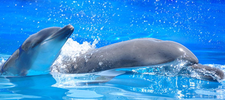 How much do you know about dolphins?