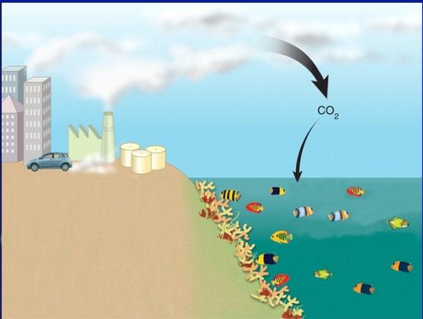 Aprenda 5 consecuencias temibles sobre la acidificaci n for Ph piscina bajo consecuencias
