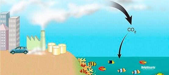 learn-5-scary-consequences-ocean-acidification