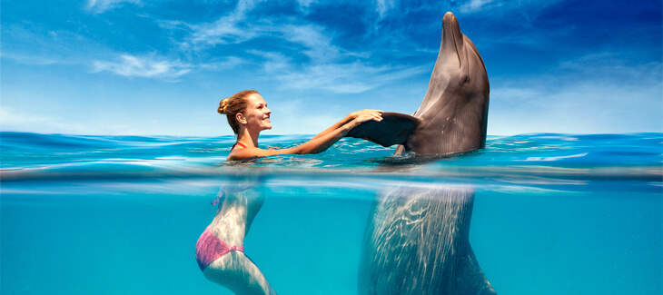 Make your dreams come true: swim with dolphins!