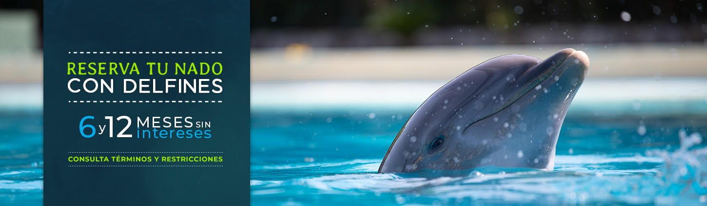 Reserva tu nado con delfines y aprovecha está promoción de 6 y 12 meses sin intereses.