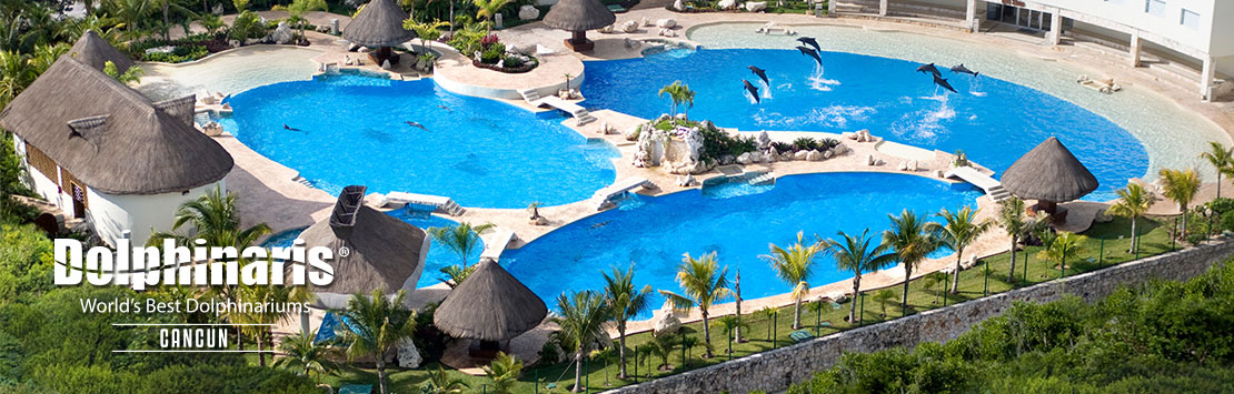 Nada com golfinhos em Dolphinaris Cancun Mexico