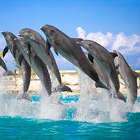 Delfines saltando, reseñas TripAdvisor