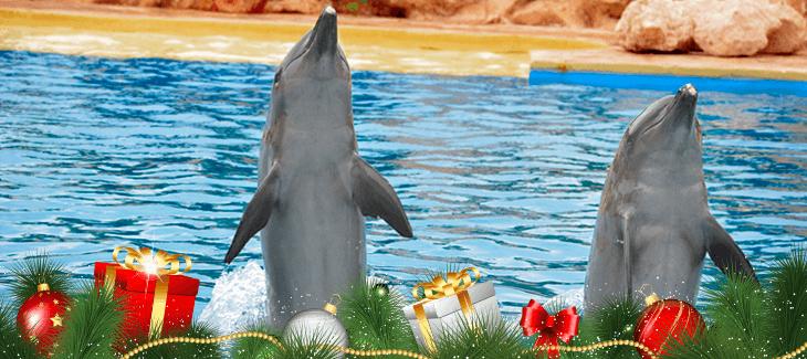 Festejando la Navidad con los delfines