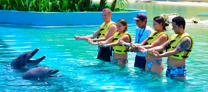 Sé un entrenador de delfines en la Riviera Maya