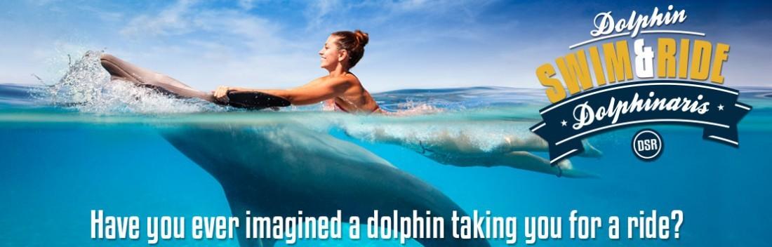 Dolphin Swim & Ride