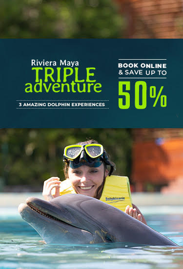 Enjoy at 3 amazing dolphin experience and save up to 50% booking online.