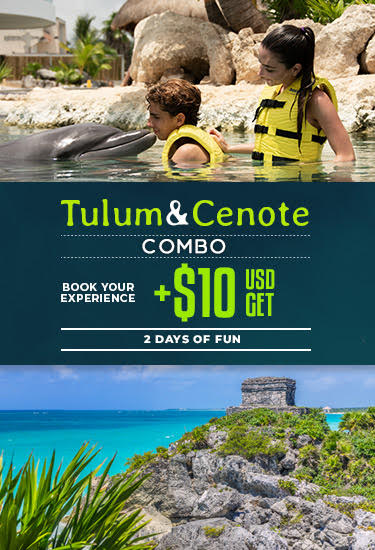 Combo Swim With Dolphins Plus Tour To Tulum