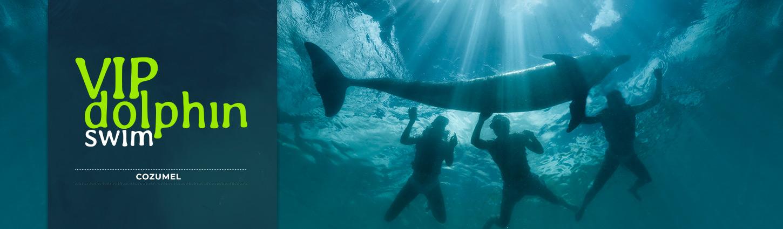 VIP Dolphin Swim